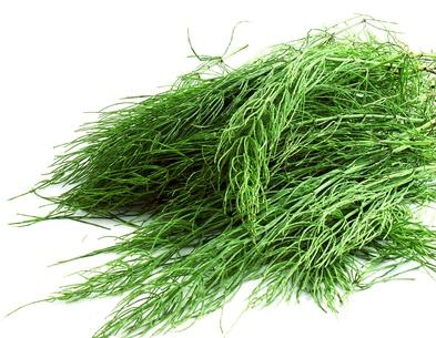 Description: http://www.welleco.com/media/wysiwyg/ingredients/horsetail2.jpg
